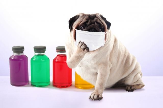 自宅でも簡単にできる犬の健康チェック法とは?