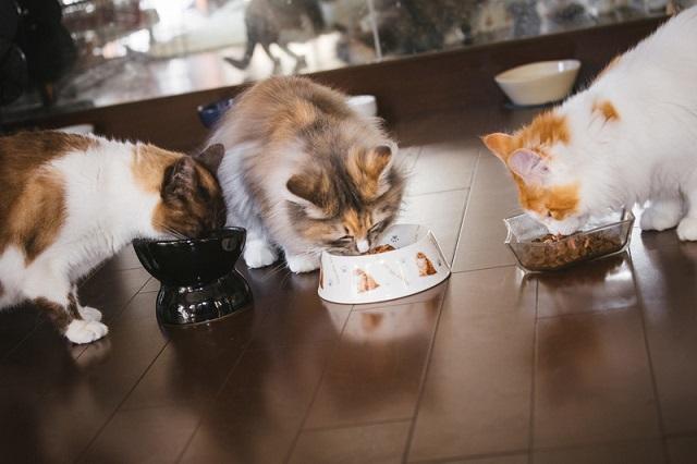 年齢で猫の食事回数は異なる