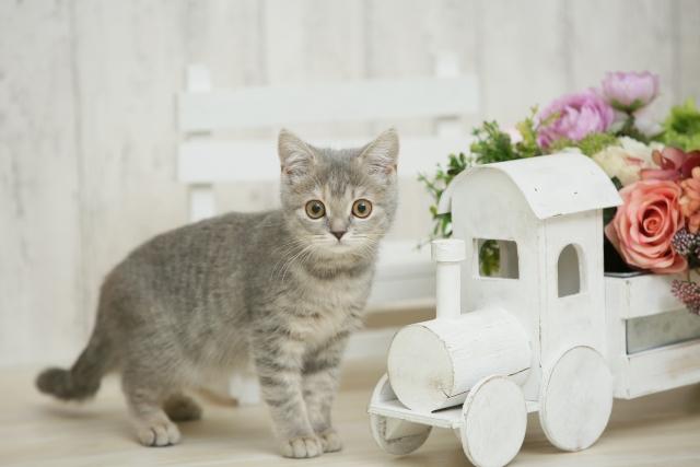 ウェットのキャットフードを利用するメリット~子猫(キトン)・高齢猫におすすめ~
