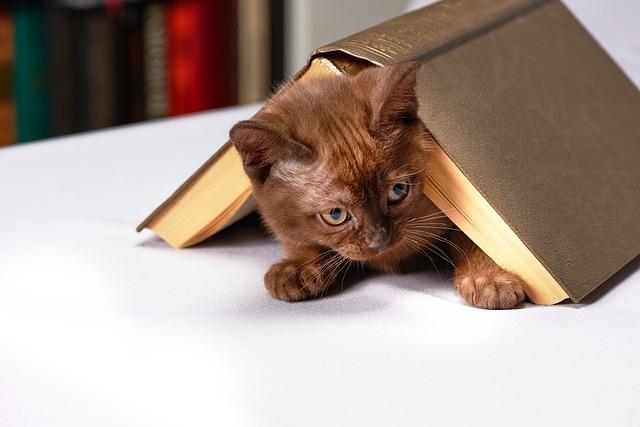 アカナのキャットフードは子猫からシニアまで対応!
