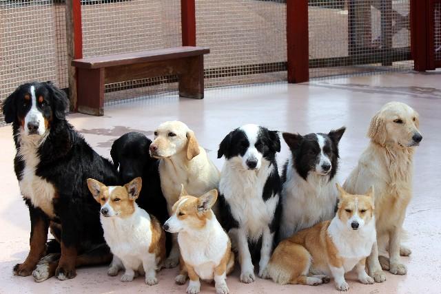犬用のペットシーツを選ぶ際の注意点